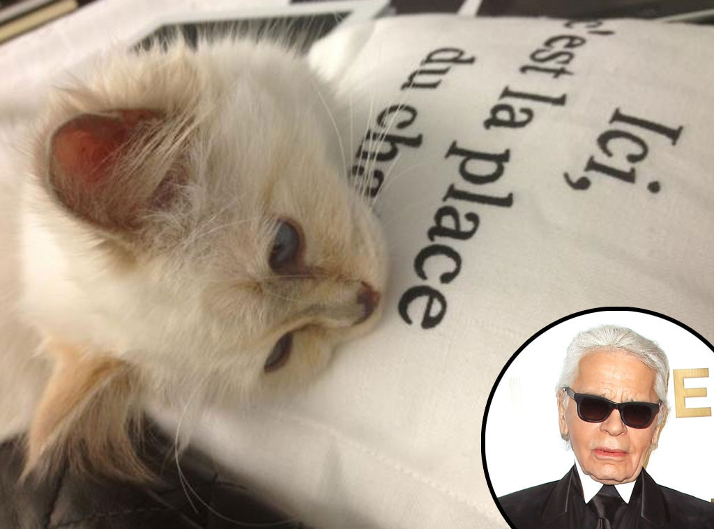 "On His Cat, Choupette: -  ""She is like a kept woman. She has a strong personality. She has lunch and dinner with me on the table, with her own food. She doesn't touch my food. She doesn't want to eat on the floor. She sleeps under a pillow and she even knows how to use an iPad."""