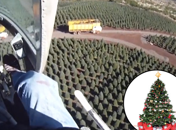 This Is Where Your Christmas Trees Come From
