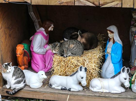 Cats in Brooklyn Manger
