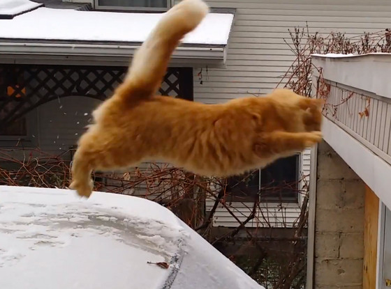 Two Christmas Cat Fails Captured On Video Should Make Your