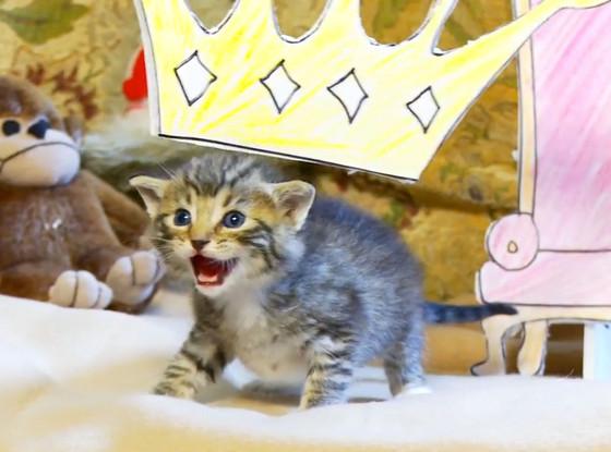 Lion King kitten