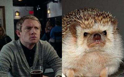 Martin Freeman Hedgehog