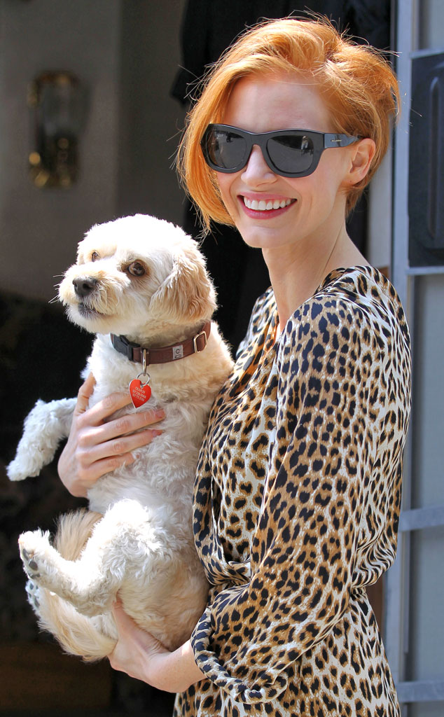 Jessica Chastain, Chaplin, Adopted Dogs