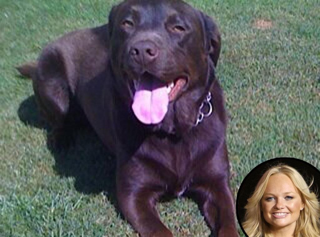 Emma Bunton, Missing Dog