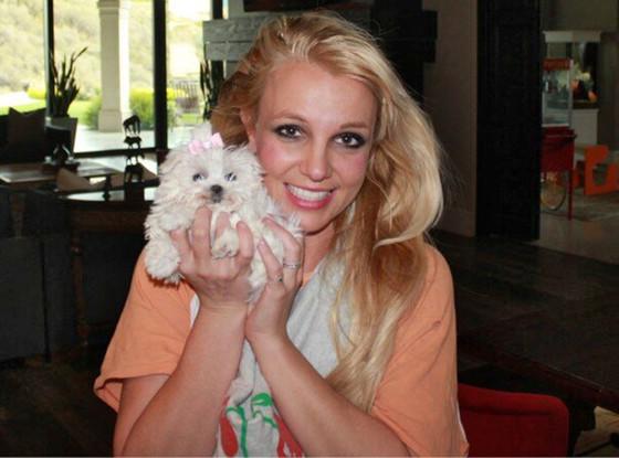 Britney Spears, Dog, Twit Pic