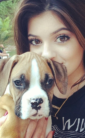 Kylie Jenner, Puppy