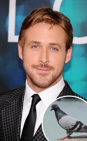 Ryan Gosling, Pigeon