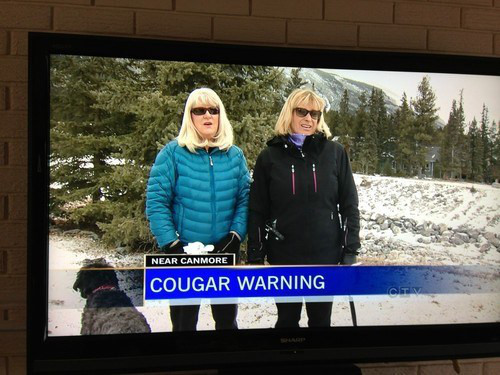 Cougar Warning