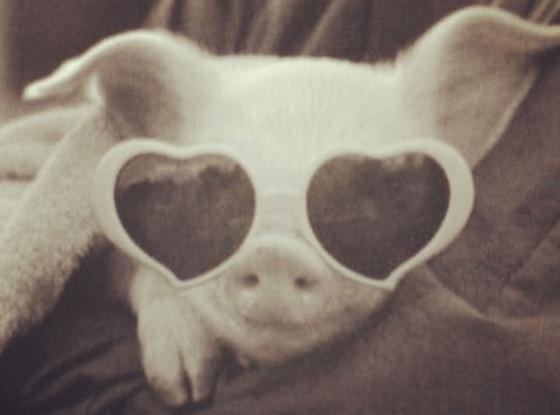 Baby Pig, Twitter