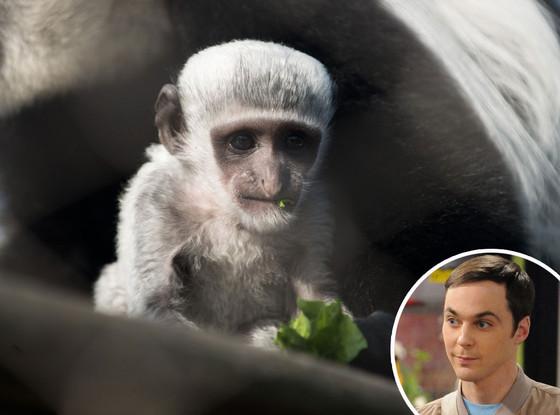 Jim Parsons, The Big Bang Theory, Colobus Zoo monkey, Dr. Sheldon Cooper
