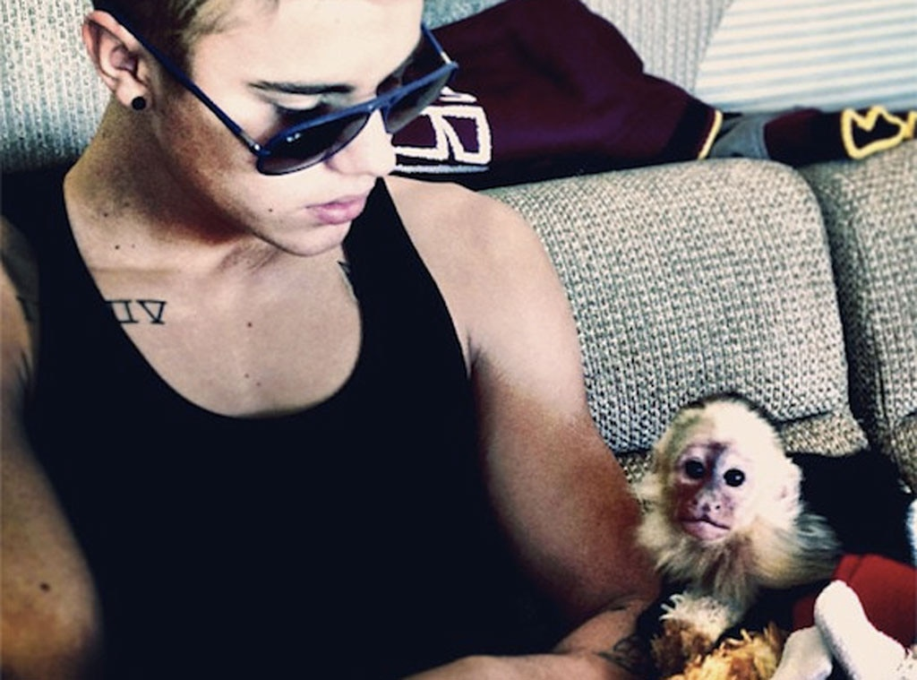 """Justin Bieber -  The """"Sorry"""" singer's pet capuchin monkey, OG Mally, shot to international fame in 2013 when he was confiscated in Munich after Bieber failed to provide the proper travel paperwork for the animal. Mally now lives at a national park in Copenhagen."""
