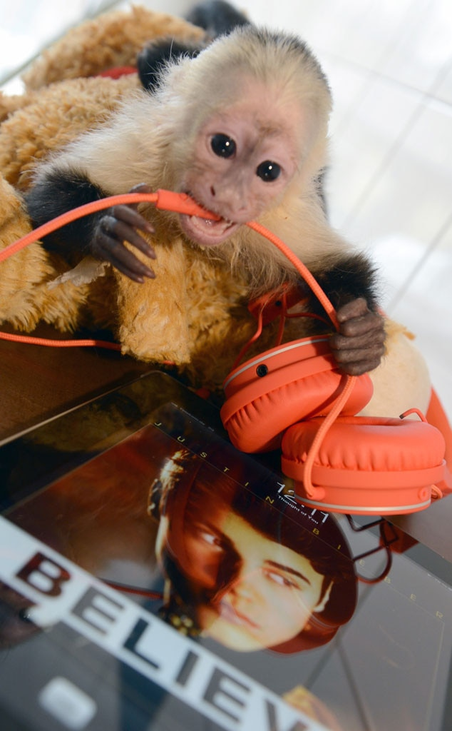 Justin Bieber Monkey Mally