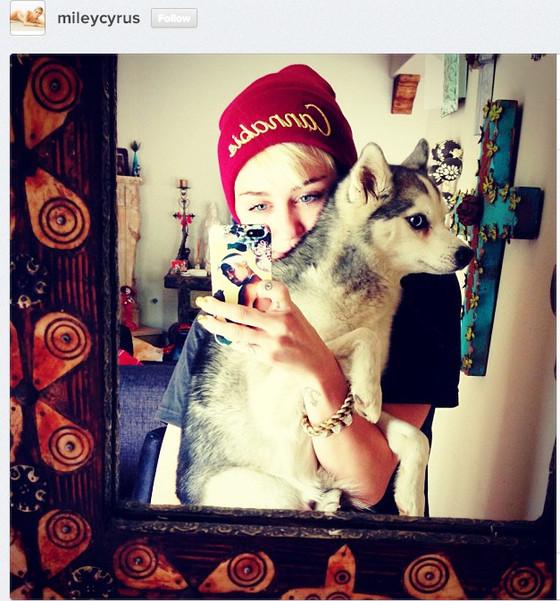 Miley Dog Insta 1