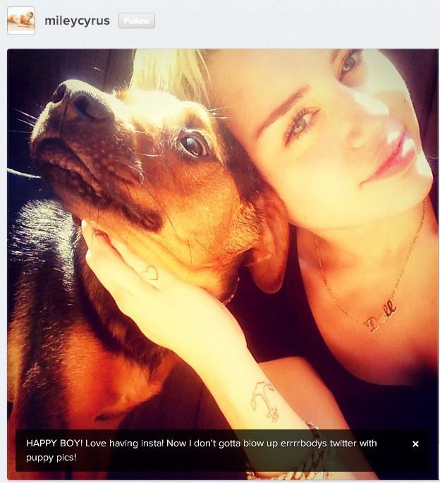 Miley Dog Insta 2