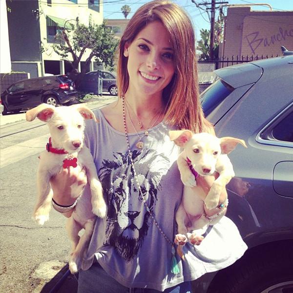 Ashley Greene, Dogs, Instagram