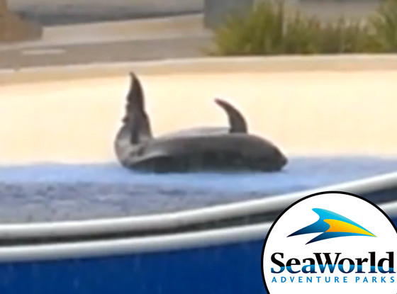 Sea World, Stuck Dolphin