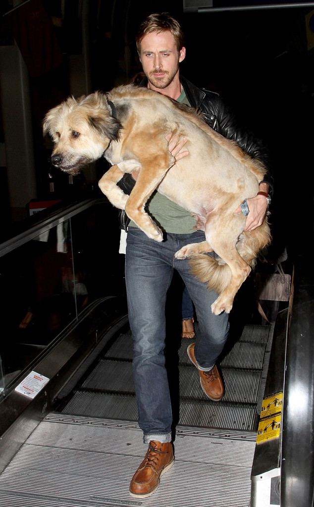 Ryan Gosling, George, Adopted Dogs