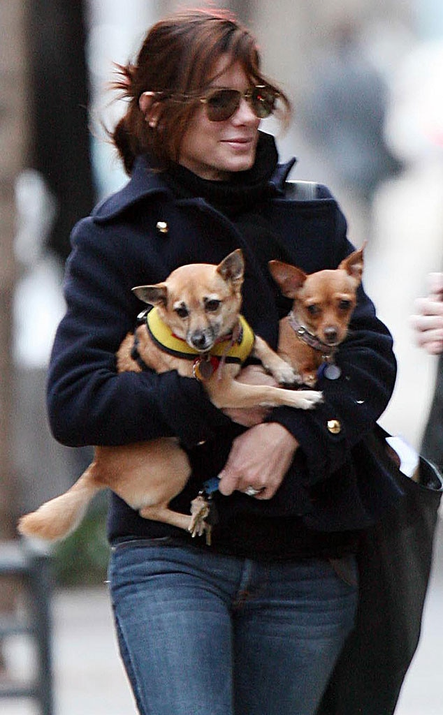 Sandra Bullock, Adopted Dogs