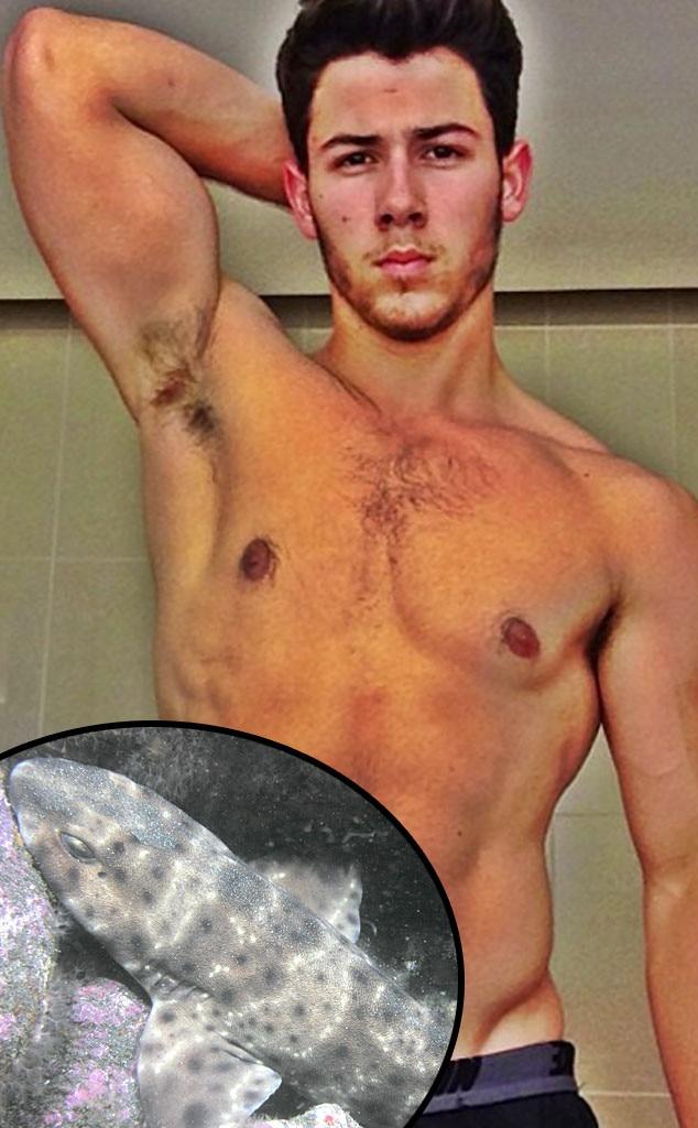 Nick Jonas, Swell Shark