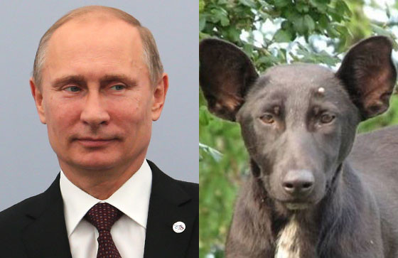 President of the Russian Federation Vladimir Putin, Dog