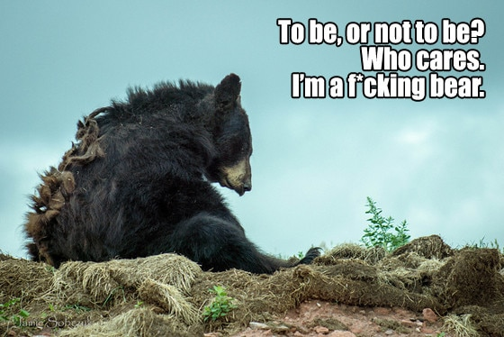 Existential Bear 5