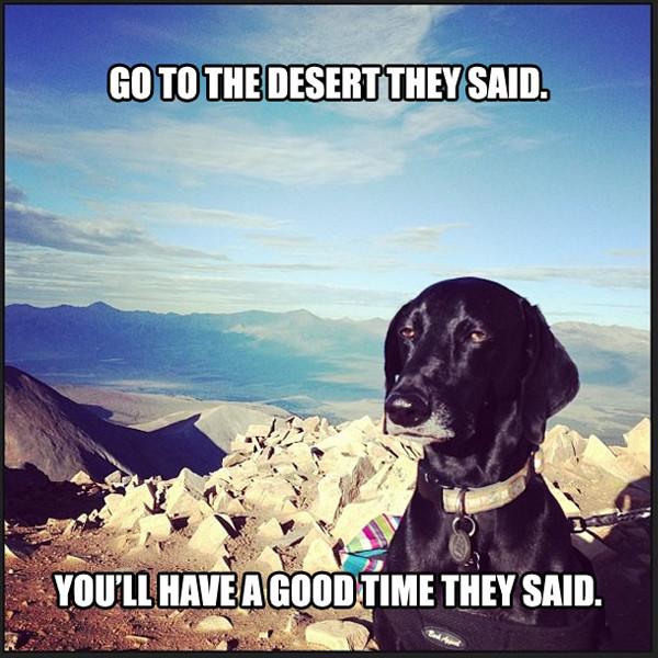 Unimpresssed Dog, Meme