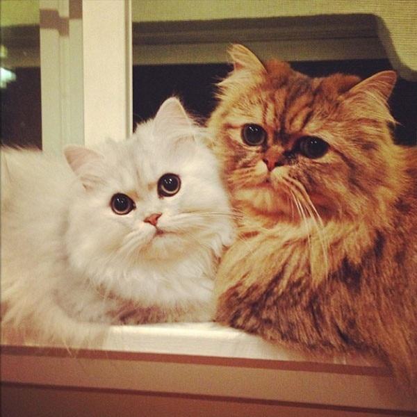 E! Loves, National Cat Day
