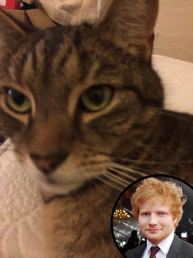 Ed Sheeran Cat witter