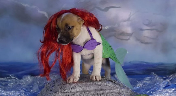 Adorable Disney Puppies in Slow Motion