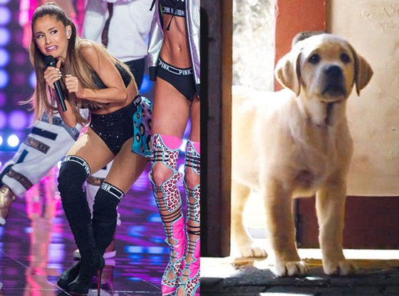 Ariana Grande vs. Cute Puppy: Vote for the Top Viral Moments of 2014!