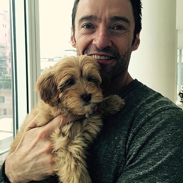 Hugh Jackman, Dog