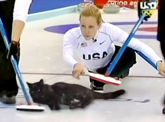 Cat Curling
