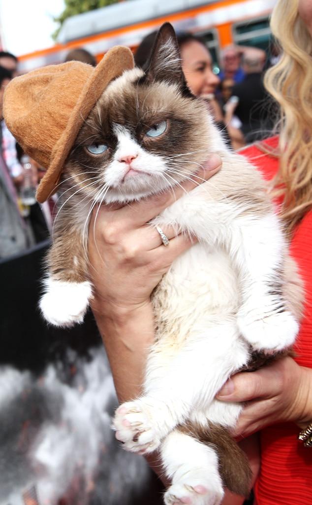 Grumpy Cat, MTV Movie Awards