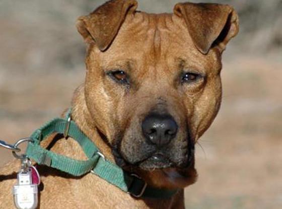 Vicktory Dogs, Oscar