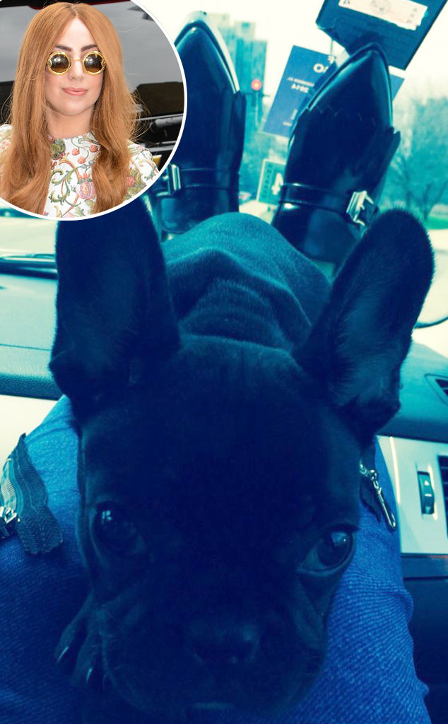 Lady Gaga, Asia