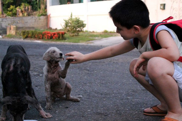 9-Year-Old Boy Starts Feeding Stray Dogs, Ends Up Opening