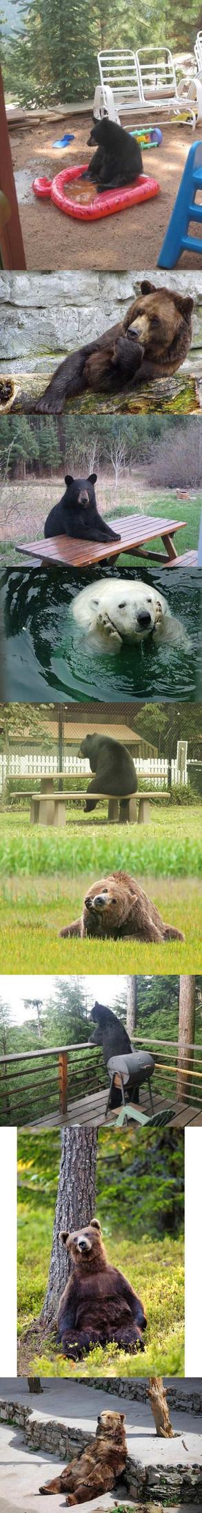 Ursos pensadores