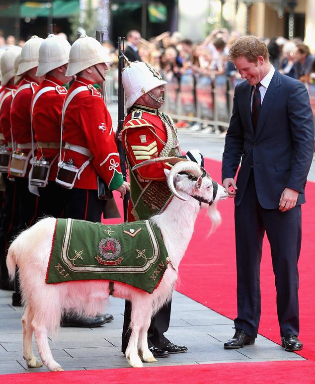 Prince Harry, Goat