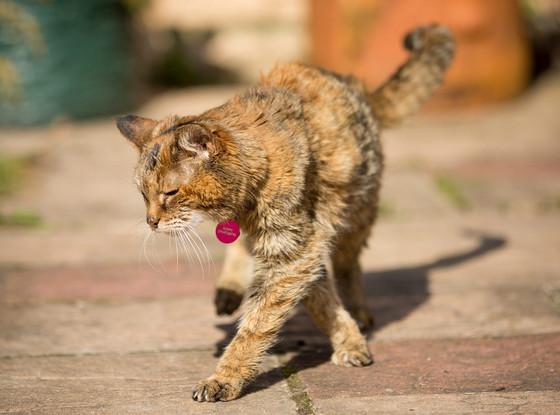 Poppy, World's Oldest Cat