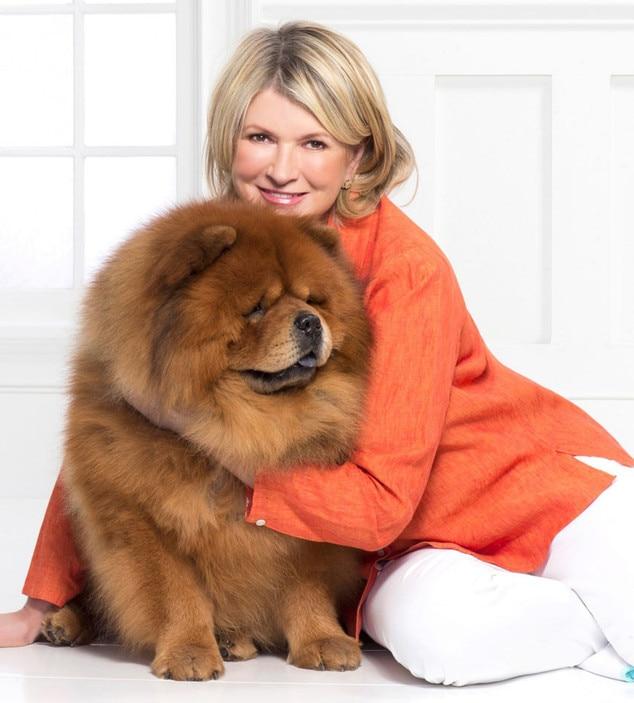 Celebrity Dog Names - PuppyDog Web