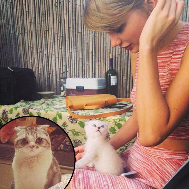 Taylor Swift's Cats Meredith & Olivia