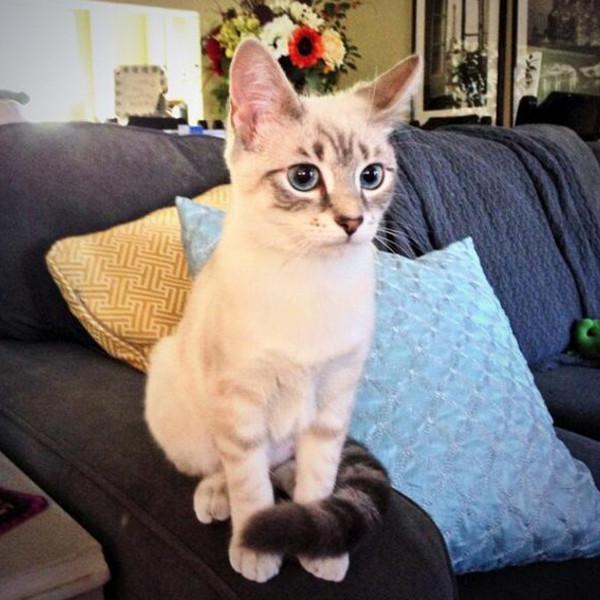 E!'s Cutest Cat, Quinn