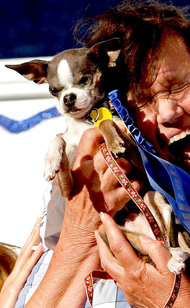 Princess Abby, World's Ugliest Dog