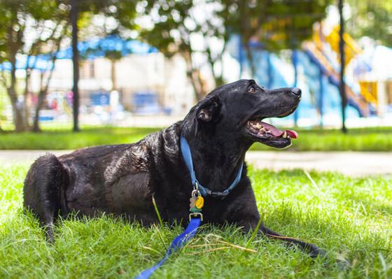 Duke Roberts, Dog
