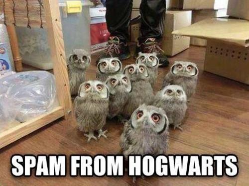 18 Jokes Only Harry Potter Fans Will Understand   E! News