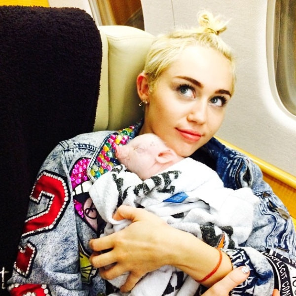 """Miley Cyrus -  The """"Wrecking Ball"""" singer is a bonafide animal lover with many dogs and cats in her pet history, but no animal was more unique to Cyrus' clan than her pet pig, Pig."""
