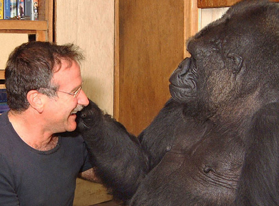Robin Williams, Koko the Gorilla