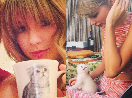 Taylor Swift's Cat Obsession
