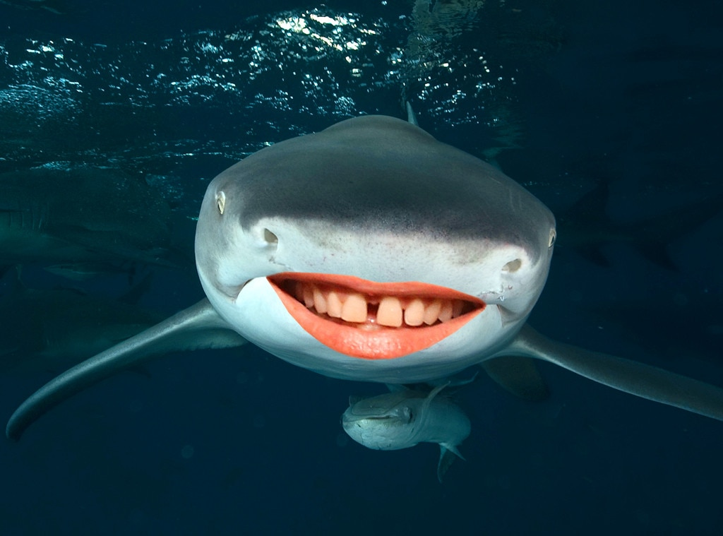 Celeb Shark Smiles, Shark Week