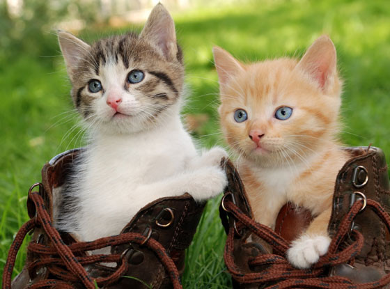 Kittens, World Cat Day